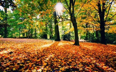 5981_autumn-carpet-in-the-forest-sunny-day-of-september